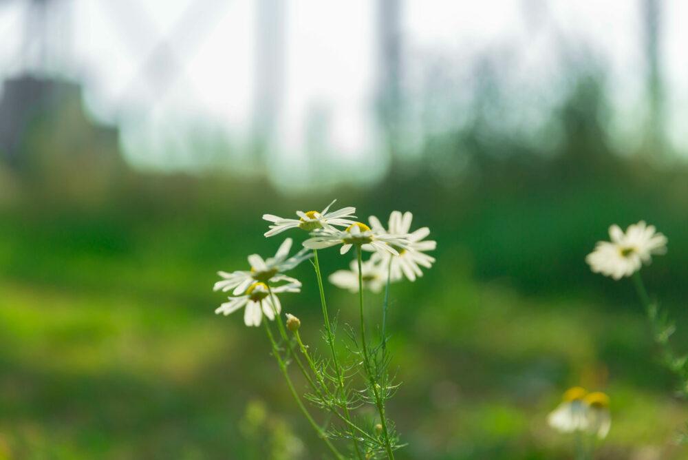 Brengt toename biobased materialen biodiversiteit in gevaar?